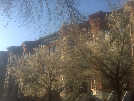the trees on my block